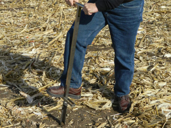 soil sampling in corn field