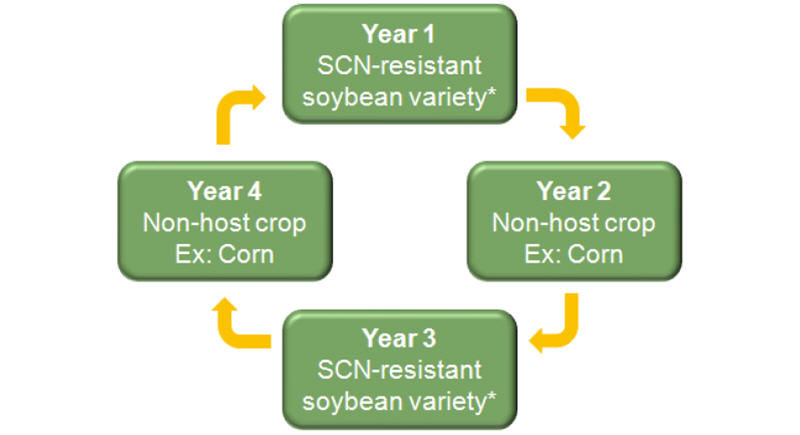 Crop Rotation Strategy
