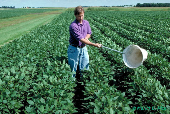 Scouting for bean leaf beetle