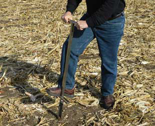 Soil sampling after corn harvest.