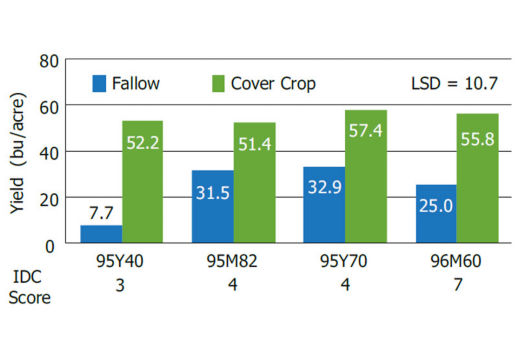 Soybean yield response comparing the impact of a cover crop vs. a fallow field in 2012.