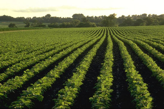Soybeans require about 3.5 lbs. of nitrogen per bushel of yield.