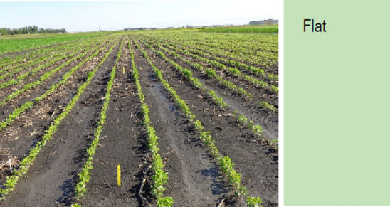 Photo: Flat soybean bed.