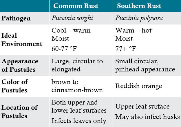 Table - Distinguishing characteristics of common rust vs. southern rust.