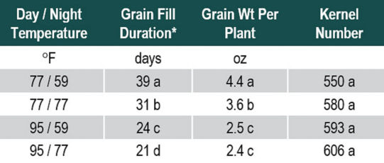 Table showing effect of temperature on grain fill duration, grain weight per plant and kernel number.