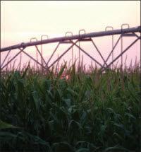 Irrigation in corn field.