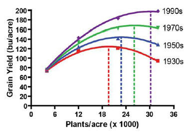Grain yield response to plant population