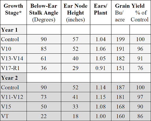 Simulated wind lodging influence on corn stalk development, ear number and grain yield.