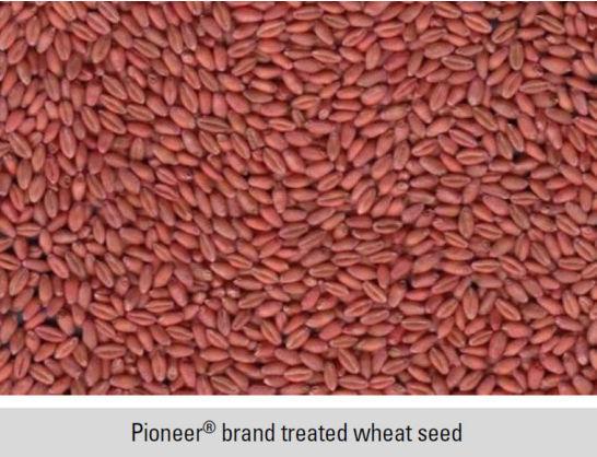 Pioneer® brand treated wheat seed