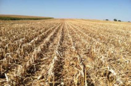 High Residue Corn Field