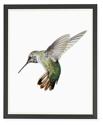 Paul Nelson, Anna's Hummingbird I, 2018