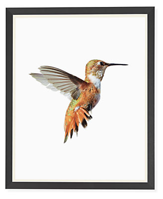 Paul Nelson, Rufous Hummingbird, 2018