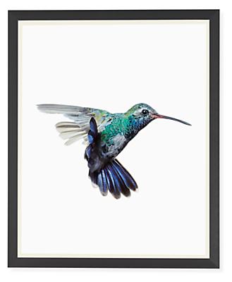 Paul Nelson, Broad-Billed Hummingbird, 2018