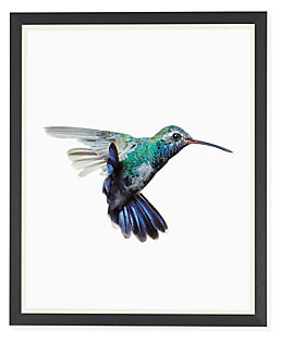 Paul Nelson, Broad-Billed Hummingbird, 2018