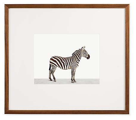Sharon Montrose, Zebra