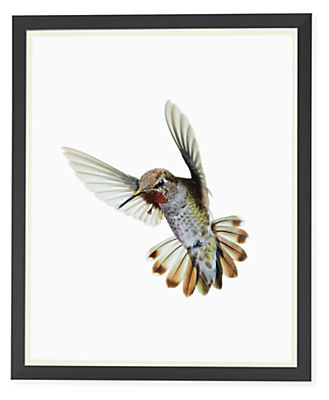 Paul Nelson, Anna's Hummingbird II, 2018