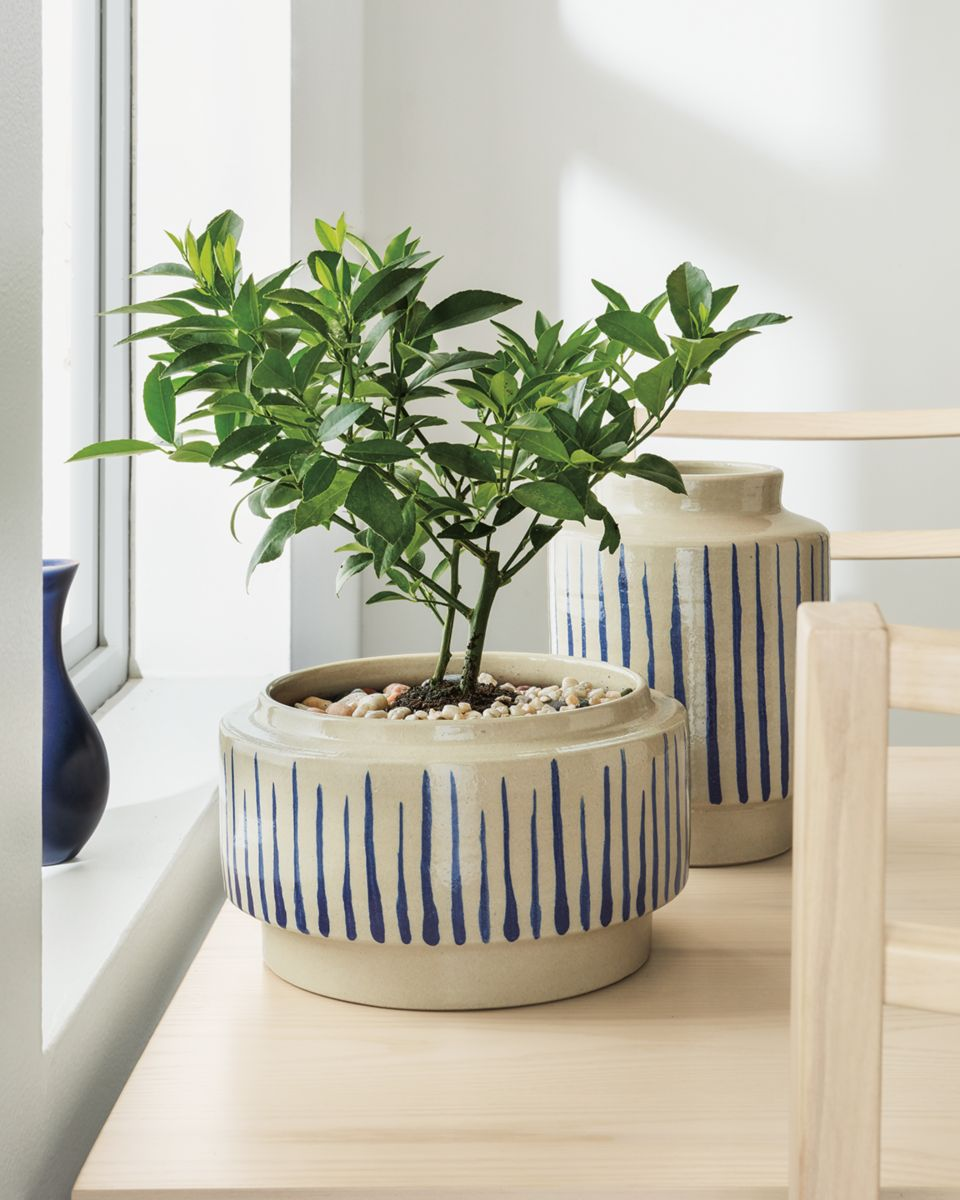 Detail of Penrose striped bowl planter