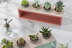 Indoor succulent garden project - two painted wooden racks, each holding four painted clay pots, on a marble countertop surface