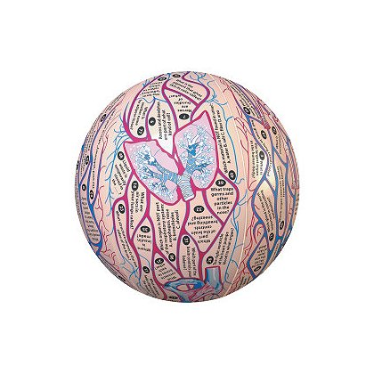 Simulaids Human Anatomy Clever Catch Ball